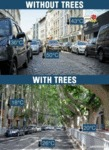 Without Trees - With Trees