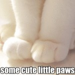 Some Cute Little Paws
