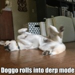 Doggo Rolls Into Derp Mode