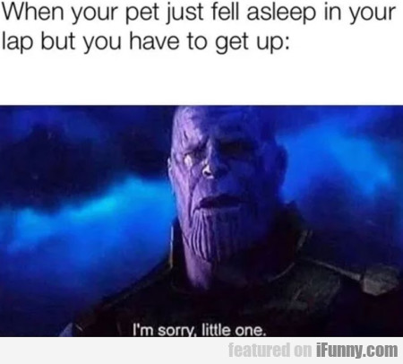 When your pet just fell asleep in your lap but...