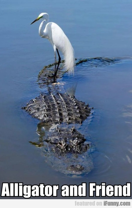Alligator And Friend