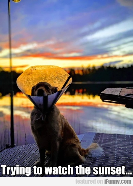 Trying To Watch The Sunset