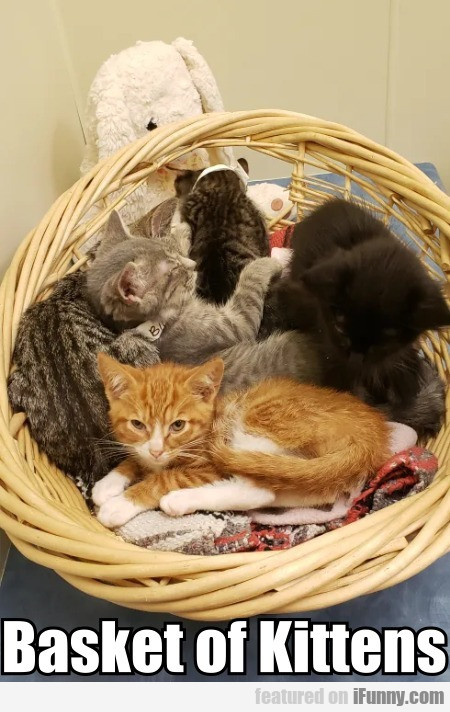 Basket of Kittens