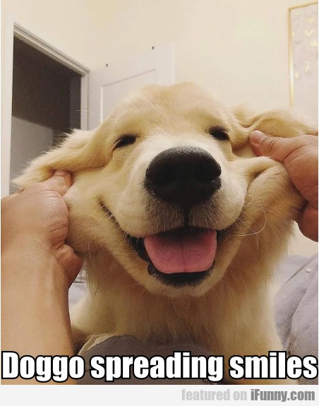Doggo Spreading Smiles