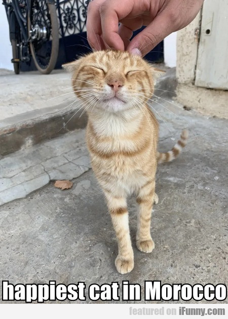 Happiest Cat In Morocco