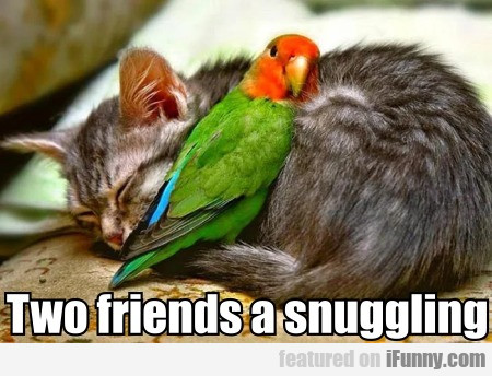 Two Friends A Snuggling