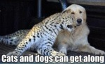 Cats And Dogs Can Get Along