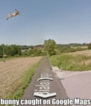 Bunny Caught On Google Maps