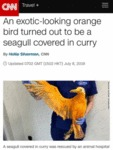 An Exotic-looking Orange Bird Turned Out To Be...