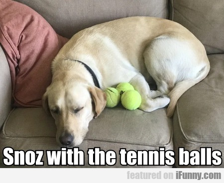 Snoz With The Tennis Balls