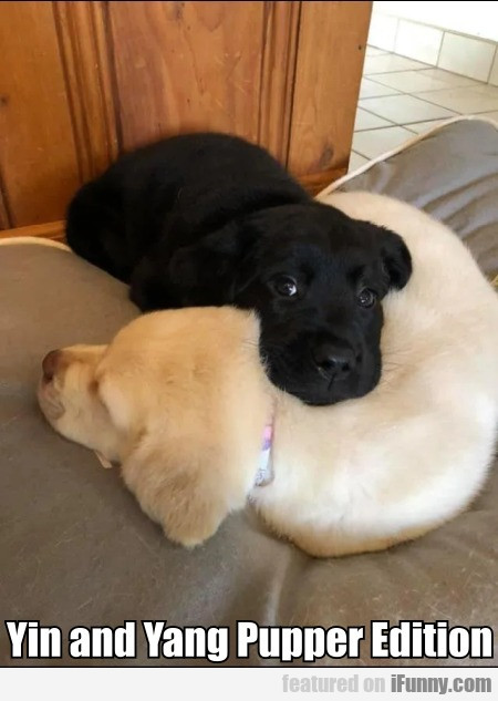 Yin And Yang Pupper Edition