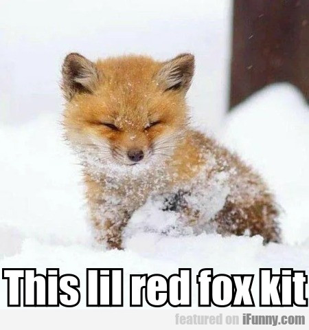 This lil red fox kit