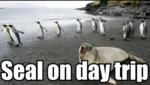 Seal On Day Trip