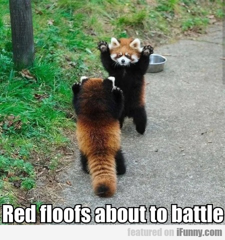 Red Floofs About To Battle