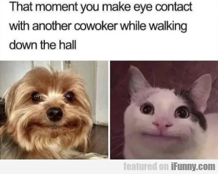That Moment You Make Eye Contact With...