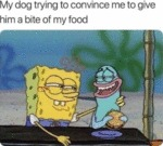 My Dog Trying To Convince Me To Give Him A...