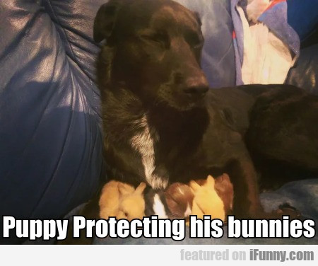 Puppy Protecting his bunnies