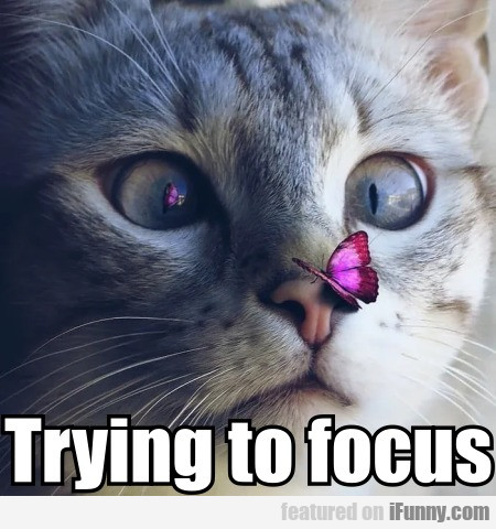 Trying to focus
