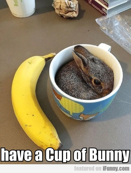 Have A Cup Of Bunny