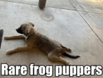 Rare Frog Puppers