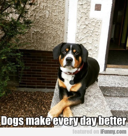 Dogs make every day better