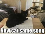 New Cat Same Song