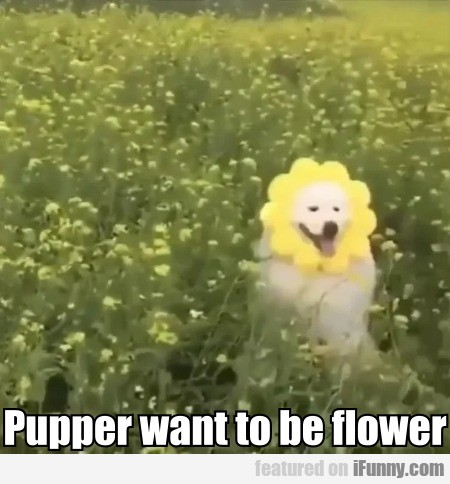 Pupper Want To Be Flower