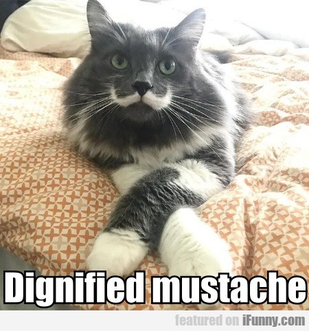 Dignified Mustache
