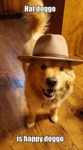 Hat Doggo Is Happy Doggo