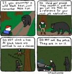 If You Encounter A Wild Black Bear...