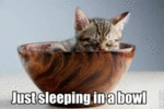 Just Sleeping In A Bowl