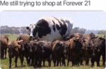 Me Still Trying To Shop At Forever 21