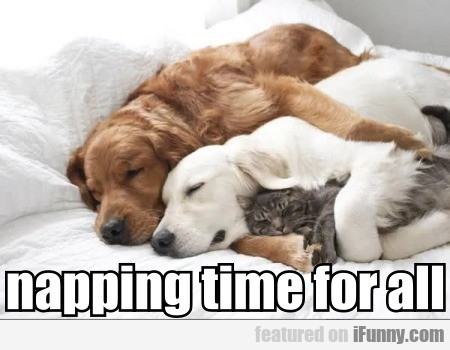 Napping Time For All