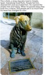 This Is Rufo, A Stray Dog Who Live In Oviedo