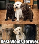 Best Woofs Forever