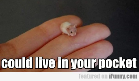 could live in your pocket