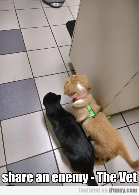 Realized They Share An Enemy - The Vet