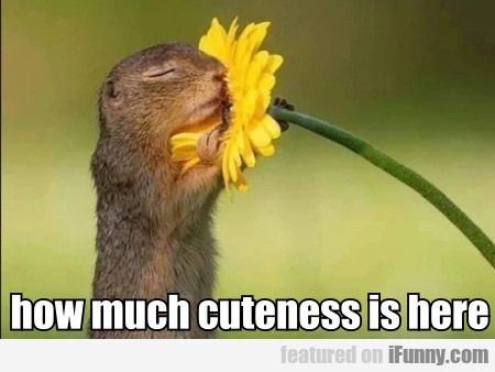 How Much Cuteness Is Here