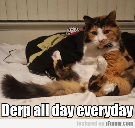 Derp All Day Everyday