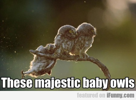 These majestic baby owls