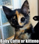 Baby Catto Or Kitteno