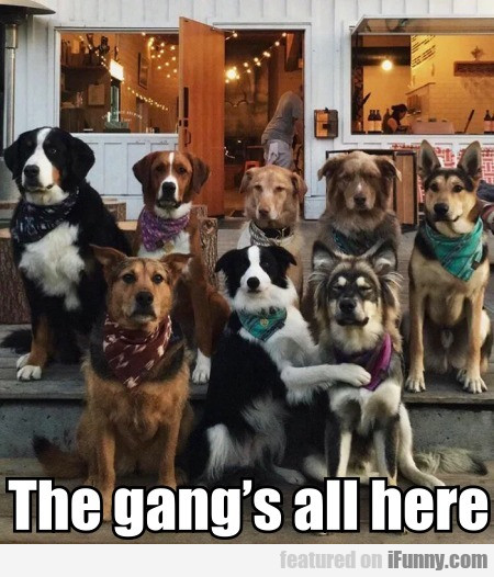 The Gang's All Here