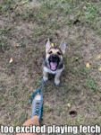 Too Excited Playing Fetch