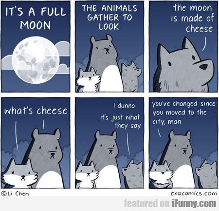 it's a full moon. the animals gather to look.