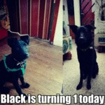 Black Is Turning 1 Today