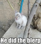 He Did The Blerp
