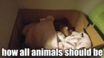 How All Animals Should Be