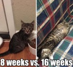 8 Weeks Vs. 16 Weeks
