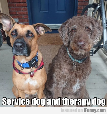 Service dog and therapy dog