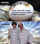 Nature - Creates A Fish With A Deadly Toxin And